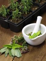 Fresh herbs and their young plants photo