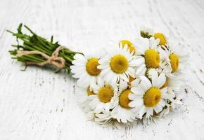 flores de camomila em um fundo de madeira