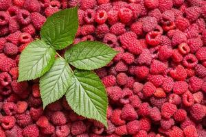 raspberry background with green leaf photo