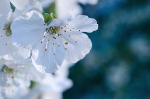 Flores de primavera sobre fondo abstracto borroso foto
