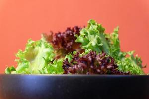 vegetal hidrópico pronto para comer