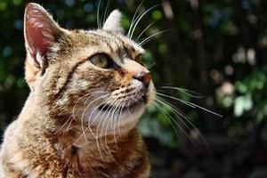 Looking cat photo