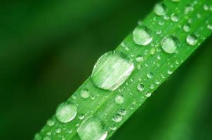 Macro of raindrop photo