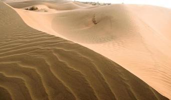 línea de arena foto