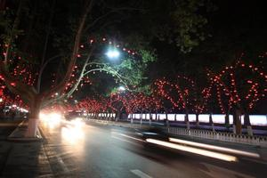 vehicles and light, trees in the modern city