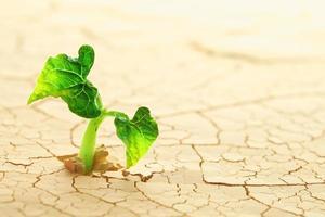 planta brotando en el desierto