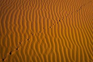 Footprints in the red desert. photo