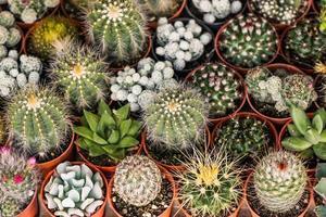 Kaktuswüstenpflanze.