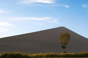 Sand dune, tree, and grass in sunset time