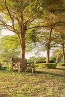 banco de madeira vintage em branco sob a sombra de uma árvore