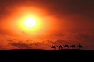 caravana de camellos foto