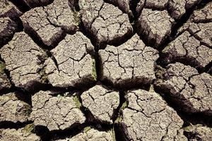 desiccated crop land