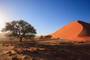 Dune photo
