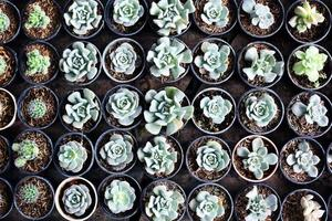 fila de cactus pequeños