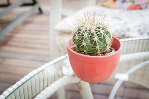 cactus  on table with in vignetted photo