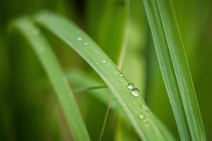 Beautiful green leaf