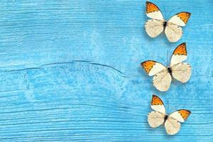 Butterfly on the blue wooden background photo