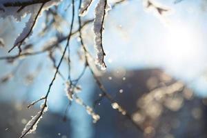 Visión abstracta de la nieve del invierno en las ramas de los árboles