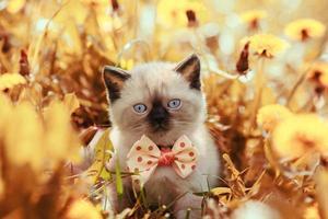 Vintage portrait of little kitten in flowers photo
