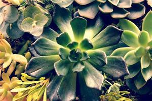 jardín de plantas suculentas