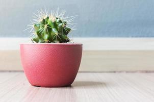 Cactus in plastic pot on wood floor