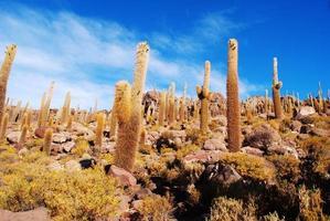 isla incahuasi (isla cactus) - salar de uyuni, bolivia foto