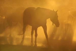 caballos en polvo