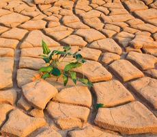 Cracked soil ground background textured