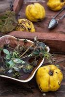herbal  tea with quince photo
