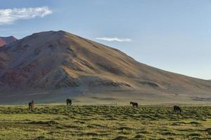 Horses on green pasture in mountains photo