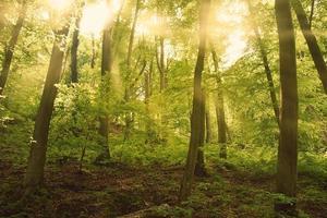 bosque foto