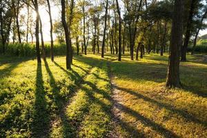 bosque de verano