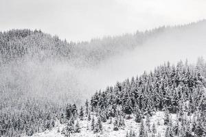 forêt d'épinettes