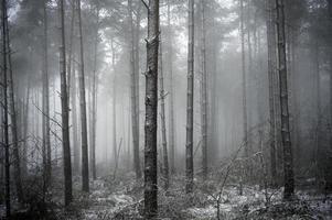bosque en niebla foto