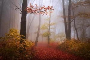 Trail in misty forest photo