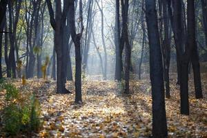Fall in forest photo