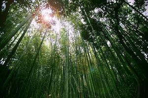 Kyoto bamboo forest photo