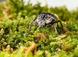 Beetle on forest floor