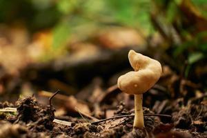 Mushrooms in autumn forest