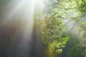 Forest in the sun photo