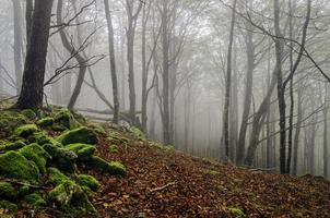 Fog in the forest photo