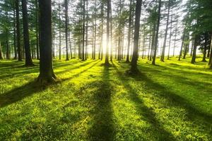sunny forest photo