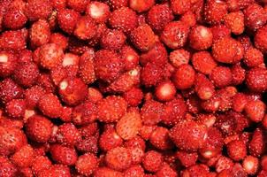Forest strawberries photo