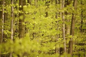 foresta di primavera