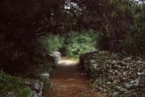 carril forestal
