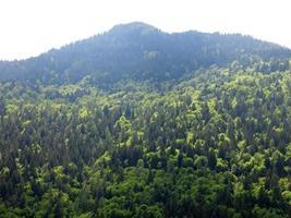 bosque de pinos de montaña italia