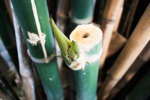 sfondo di foresta verde di bambù