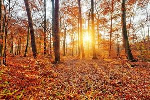 Sunlighted autumn forest