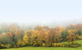 misty autumn forest photo