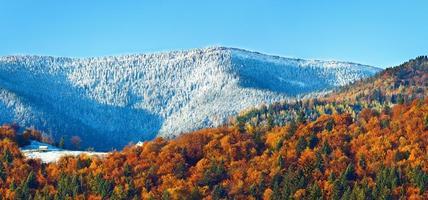 floresta de montanha de outono